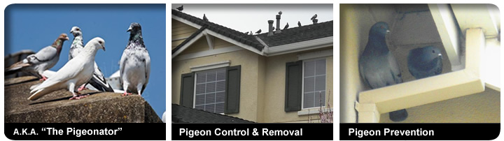 All Pro Window Cleaning Service Bird Proofing Window